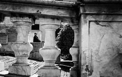 NegColor-140516-007.jpg (pietroferrarifotografie) Tags: leica bw film monochrome scanner famiglia persone m3 biancoenero giorno esterni pellicola anlogico epsonv550