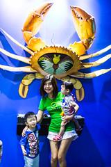 IMG_2616 (AK Kua) Tags: singapore underwater sentosa underwaterworld