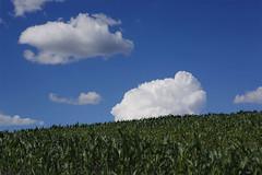 Wolkenstimmung ber dem Mhlviertel (rubrafoto) Tags: sommer landwirtschaft wolken wetter stimmung mhlviertel maisfeld ottensheim wolkenstimmung ooe witterung wolkenhimmel grnland wetterbild sommerlandschaft