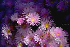 loving daisy (zuiko94) Tags: flower macro nature nikon heart daisy nikkor natgeo flowerporn nikkorlens nikond3200 nikonian d3200 nikonlove nikonphotography nikonitalia nikonpic nikonitaly nikonofficial nikontop nikonature nikonpotrait
