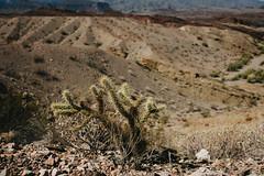 5R6K2592 (ATeshima) Tags: arizona nature havasu