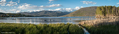 Golden hour at Shadow Mountain Lake panorama (Vironevaeh) Tags: panorama mountain lake mountains west pelicans nature water birds outdoors scenery colorado pano scenic photomerge americanwest photostitch theamericanwest thewest shadowmountainlake