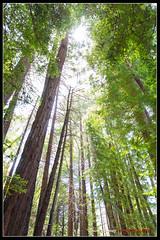 ECP_0763 (e.chavez) Tags: ocean california blue trees west beach nature water cali canon coast big paradise pch beaches sur northern pheiffer 5d3