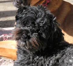 Fiona. (jagar41_ Juan Antonio) Tags: animal perro perros animales mascotas