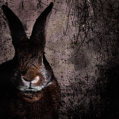 Seriously Bunny (Jeric Santiago) Tags: pet rabbit bunny animal conejo lapin hase kaninchen   compositephotography winterrabbit
