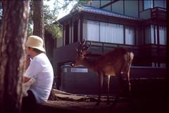 WW4701-S1-0006 (AoNA1) Tags: film japan fuji slidefilm hiroshima provia e6 nikonfe  nikkor50mm14  provia400x