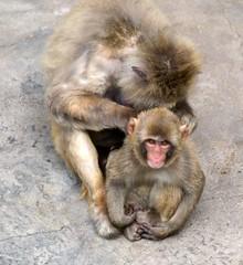 DSC_4282 (heo1013) Tags: zoo korea seoul japanesemonkey