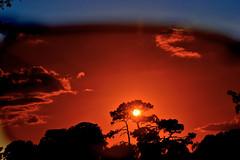Tobbacco sky (donjuanmon) Tags: blue trees sunset sky sun black sunglasses silhouette yellow filter sliders hss tobbacco slidersunday donjuanmon