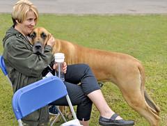 Cuddles (Dreamsmitten) Tags: blue grass tan greatdane seats blonde dogshow waterbottle roadway ownerhandler