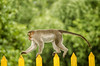 Hard path (Sathish_Photography) Tags: green nature animal monkeys tamilnadu candidshots greenary nikon5100 valpaarai sathishphotography nikon55300mmlens colourfullphotos sathishkumarphotography nikontelelens valpaaraihillstation
