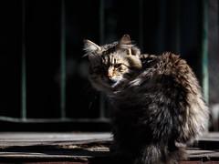 Street cat 140 (Yalitas) Tags: pet cats cat canon kat feline chat kitty gato felino katze katzen kot kedi kass gatta streetcat kotka  kocka  katte  katzchen kottur