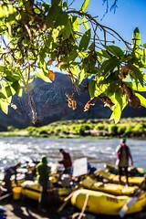 Delicate Mornings (The Noisy Plume) Tags: oregon river idaho rafting raft float riverlife owyheeriver riverpeople owyheecanyonlands
