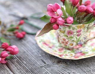 blossoms & chintz