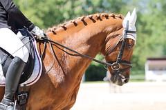 IMG_2604 (dreiwn) Tags: horse pony horseshow pferde pferd equestrian horseback reiten horseriding showjumping dressage reitturnier dressur reitsport dressyr ilsfeld dressuur ridingclub junioren ridingarena pferdesport springreiten reitplatz reitverein dressurreiten dressurpferd dressurprfung tamronsp70200f28divcusd jugentturnier