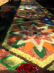 Sapporo Flower Carpet 3 (Sasakei) Tags: japan sapporo hokkaido iphone