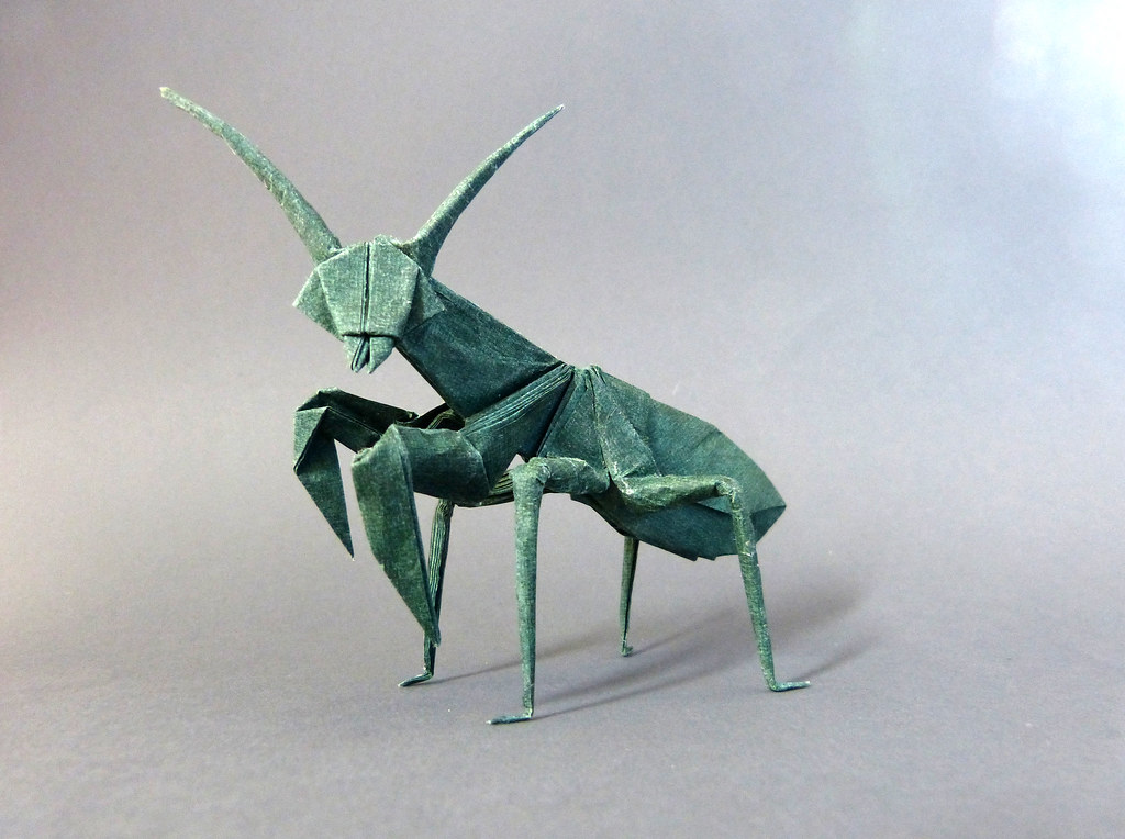 the worlds most recently posted photos of mantis and
