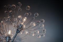 Lounge Light Fixture In Macro (Peter Greenway) Tags: lights lightfixture sidelight moodlight