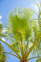 Palm tree = Holiday :-) (ma_boehm) Tags: holiday nature canon relax amazing outdoor urlaub natur bluesky palmtree palme blauerhimmel