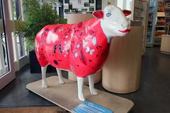 Wilma (Cumberland Patriot) Tags: wilma sheep painted go cumbria trust calvert ewe cumbrian herdwick goherdwick