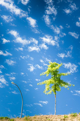 grow (memories-in-motion) Tags: blue sky tree green leaves clouds canon lampe pattern air grow himmel wolken grn blau minimalism simple bltter baum muster beleuchtung einfach wachsen canoneos5dmarkiii