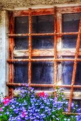 Bastano i fiori... (franco.56) Tags: flowers window colors nikon hdr franco