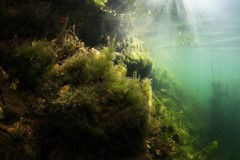 IMG_4330 (Andrey Narchuk) Tags: russia moscow freshwater green underwater weed tree