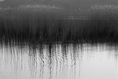 Reeds abstract in bw by ioanna papanikolaou CSC_1310 (joanna papanikolaou) Tags: reeds lake prespes prespa greece greek nature natural abstract reflections reflection details macedonia achilleios blackandwhite monochrome