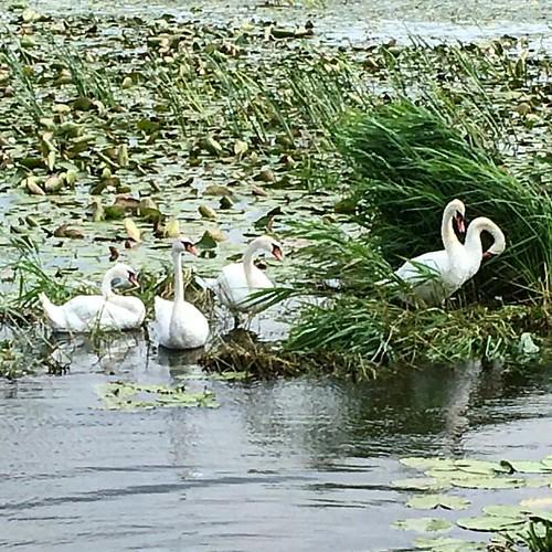 Vi tok kanalbåten gjennom et nydelig fugleområde i går.