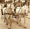 """"""" Working Horses in Czech Republic Carlsbad """" (Kalbonsai) Tags: horses bw monochrome wheels carlsbad paarden koets pferden workinghorses carlabadczech"""