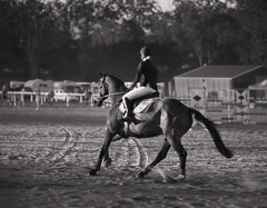At the track_c (gnarlydog) Tags: sunset blackandwhite horse monochrome animal sport bokeh outdoor australia dirt riding dust rider manualfocus goldenhour warmlight horseriding shallowdepthoffield vintagelens subjectisolation adaptedlens nikkorp105mmf25rf
