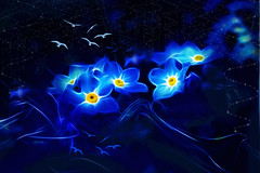 nightflowers (*Loona*) Tags: blue flower birds night composition photoshop nacht brushes plugin blau vergissmeinnicht pinsel nightflowers fractalius creativephotocafe