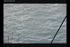les orques de Marineland (Dominique Lenoir) Tags: video orca killerwhale antibes marineland orcinusorca orka orque 06600 épaulard spækhugger späckhuggare kosatkadravá zwaardwalvis groserschwertwal miekkavalas katilbalina baleinetueuse dominiquelenoir
