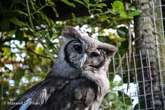 Owl at World of Birds