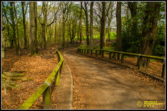 Winding Down (mikesteph0) Tags: tree nature woodland scenery natural outdoor foliage leafs