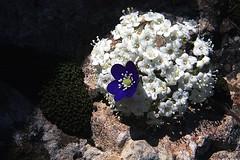 Flores (joguero) Tags:  flowerx fleurx florx fiorex bltex x x x