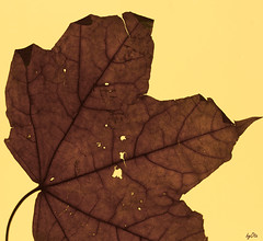 About isolation and fear ..02.. (OmarmarO 44) Tags: sunset leaves leaf fear isolation calling 2013 byota canoneosrebelt1i omarmaro