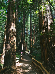 Muir Woods (miemo) Tags: sanfrancisco california travel trees summer usa nature woods path olympus muirwoods redwood omd sequoiasempervirens em5