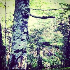 Love Surrender:heart-treeF (Napoleon18 akaVDF _ Mllownious ogo) Tags: happiness karma spiritual ff divinity olympos frequencies treelove nevergiveup transmitted everythinghappensforareason infinitelove innerism