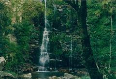 foresta e cascata d'acqua - NSW Australia (walterino1962) Tags: alberi ombre luci rocce riflessi bosco ancona ostra arbusti lagodimontagna pianterampicanti