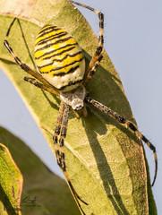 DSC03303 (Ausscheider) Tags: macro deutschland sand sony mm schmidt alpha makro tamron sven 90 slt insekten 65 tamron90mm spinnen kehl badenwürttemberg libellen makrofotografie rheinwald willstätt hesselhurst