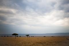 Masai Mara National Park (ChristyB30) Tags: africa kenya lion safari giraffes lions giraffe hippo wildebeest masaimara