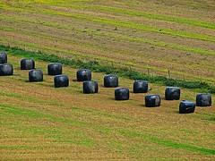Black Notes (Deepgreen2009) Tags: black field rural pattern farming feed bags regular stored