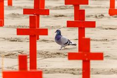 USA West (Edi Bhler) Tags: california friedhof cemetery grave santamonica structure grab taube bauwerk militr vereinigtestaaten nikond3 150500mmf563 losangelesusalm