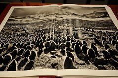 GENESIS by Sebastio Salgado (jmvnoos in Paris) Tags: paris photography book photo nikon photographer photographie photos photographers books explore photographs photograph genesis livre livres tasche