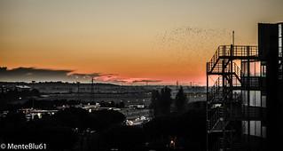 Birds&Buildings