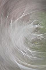Grove Swirl 14 (drainuzzo) Tags: autumn light art fall colors leaves foglie grove magic swirl autunno colori luce bosco brushstroke vortici pennellata magicalgrove