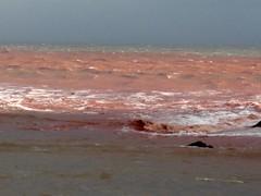 Ness Head Red Sea February 5th 2014. (Bridgemarker Tim) Tags: sand redsea storms shaldon southdevon nesshead