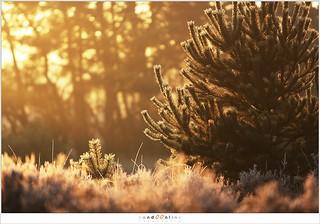 In het licht van de ochtend (5D323434)
