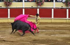 Parentis 2012 (Micheline Canal) Tags: france corrida couleur