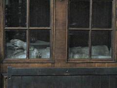 Oxford - Trinity College & Chapel (pefkosmad) Tags: wood painting university interior tomb trinitycollege chapel stainedglass carving ceiling altar organ oxford oxfordshire universityofoxford grinlinggibbons trinitycollegechapel pierreberchet sirthomaspope